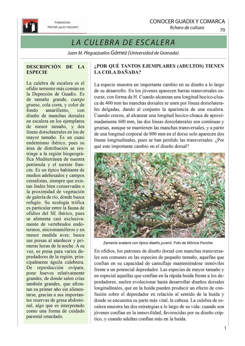 LA CULEBRA DE ESCALERA 1-min