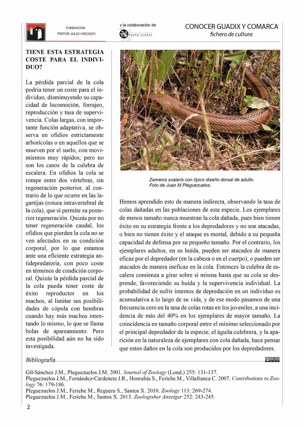 LA CULEBRA DE ESCALERA 2-min